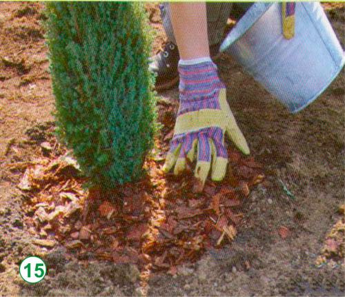 Мульча из сосновых иголок своими руками